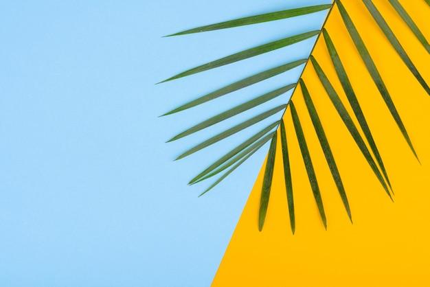 Folhas de uma planta verde sobre um fundo colorido, com um lugar para texto. fundo de verão Foto Premium