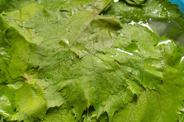 Folhas de uva para cozinhar dolma