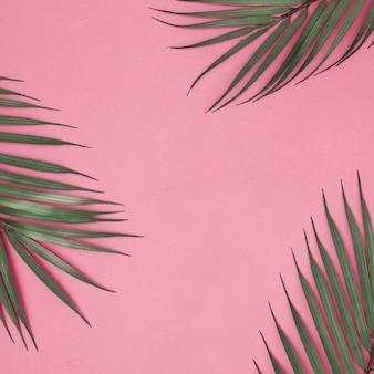 Folhas de verão em fundo rosa