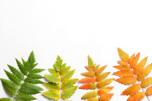 Folhas de verde a vermelho são bem adequadas para decorações de outono.
