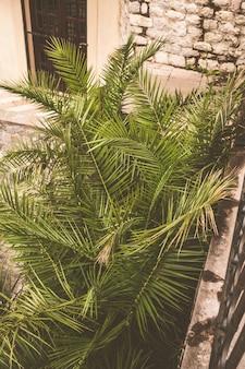 Folhas, de, verde, sulista, europeu, palma, árvore