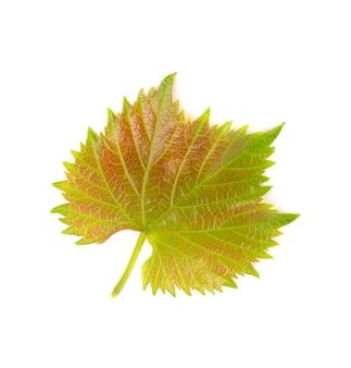 Folhas de videira verdes isoladas em branco