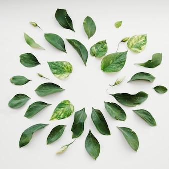 Folhas deitado em círculo