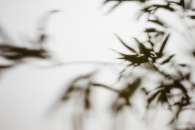Folhas desfocadas de sombra no pano de fundo branco