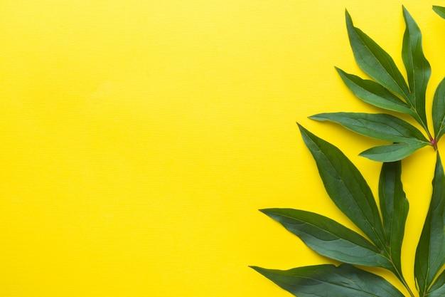 Folhas do verde no fundo amarelo. conceito de verão.