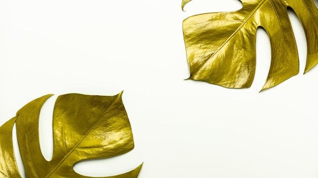 Folhas douradas isoladas no branco