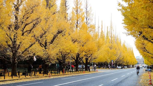 Folhas douradas na universidade de tóquio, temporada de outono em tóquio