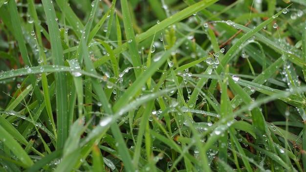 Folhas e árvores na estação chuvosa. há uma gota de água.