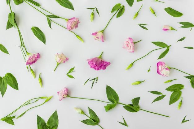 Folhas e caules perto de flores