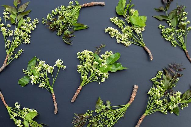 Folhas e flores de neem em fundo escuro.