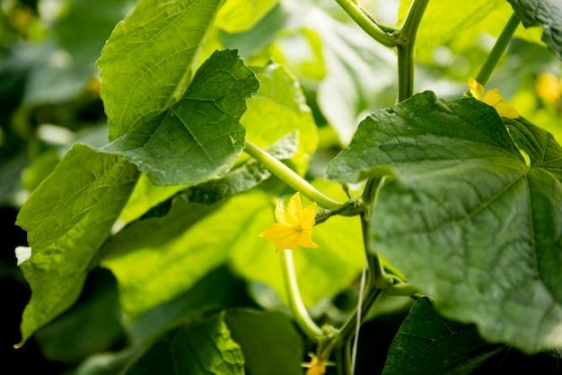 Folhas e flores de vegetais em estufa