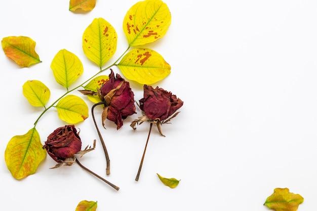 Folhas e flores rosas secas em branco