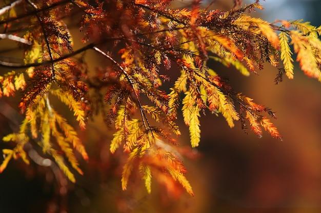 Folhas e galhos de árvores na tarde de outono.