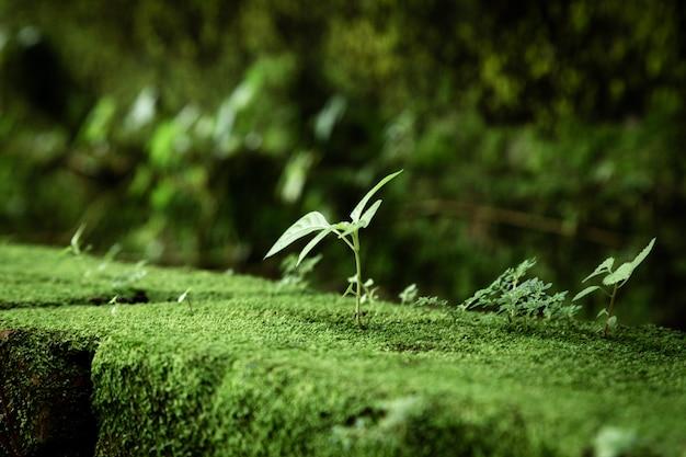 Folhas e musgo com fundo desfocado