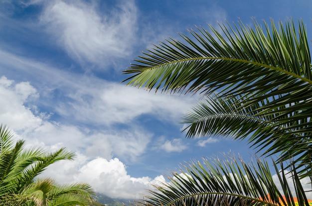 Folhas e nuvens da palmeira no céu azul - vista do céu de verão