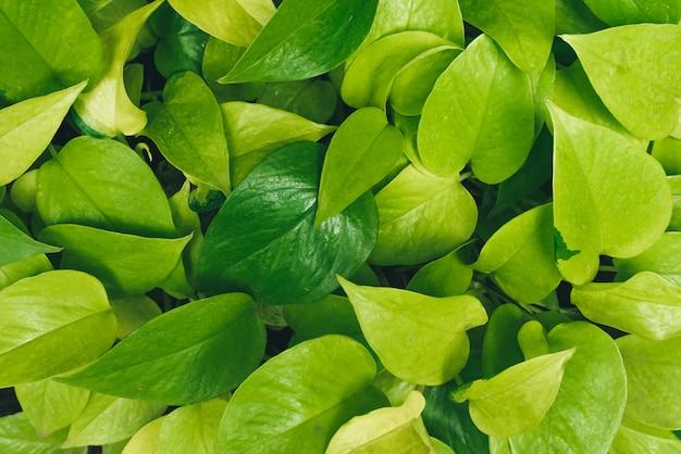 Folhas e plantas verdes