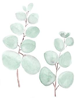 Folhas e ramos de fundo aquarela ilustração. conjunto de elementos florais de pintados à mão. ilustração botânica em aquarela. eucalipto, oliveira, folhas verdes.
