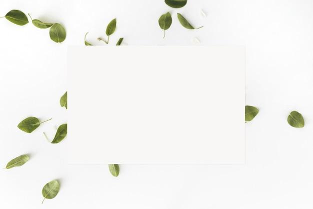 Folhas e um cartão branco em branco sobre fundo branco, vista superior. postura plana. brincar.