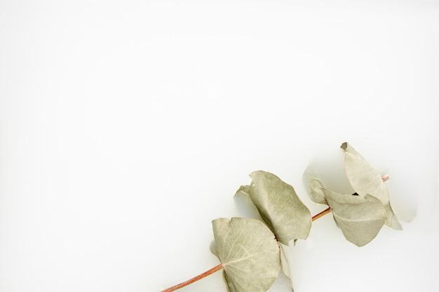 Folhas em água branca com espaço de cópia