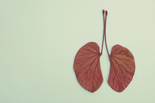 Folhas em forma de pulmão