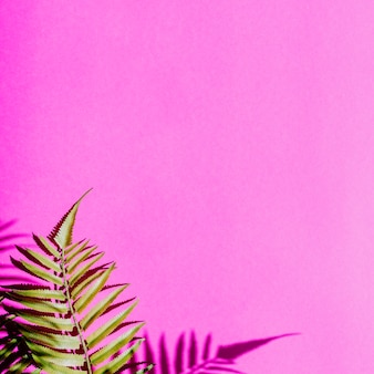 Folhas em fundo colorido