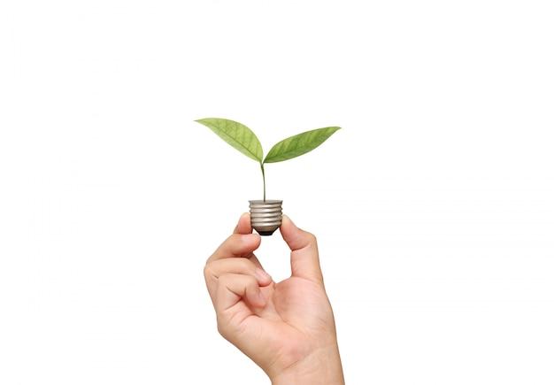 Folhas em uma lâmpada