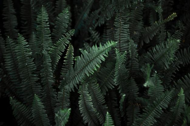 Folhas escuras de samambaia