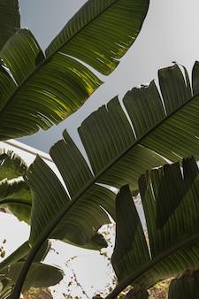 Folhas exóticas de palmeiras tropicais no verão contra o céu azul