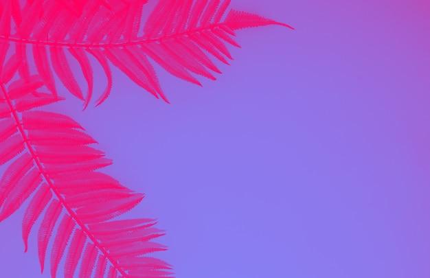Folhas exóticas de samambaia rosa contra o fundo azul, tonificação de néon na moda