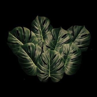 Folhas exóticas e monstera da floresta tropical da folhagem do projeto mínimo. conceito de natureza. cartão floral.