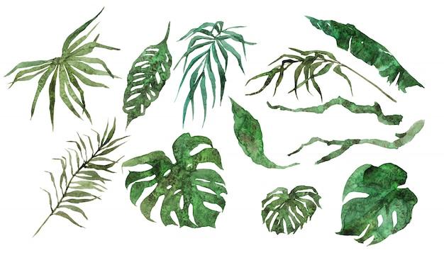 Folhas exóticas tropicais e ramos isolados no fundo branco