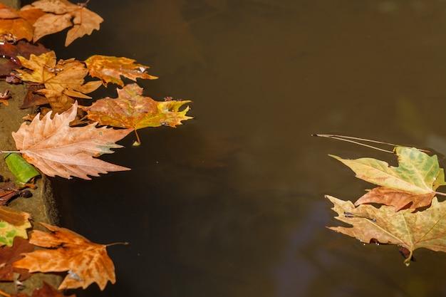 Folhas flutuando em uma poça em um parque da cidade