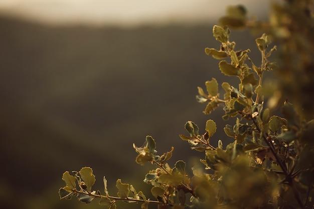 Folhas focadas com fundo de montanha