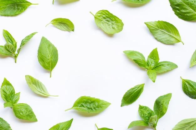 Folhas frescas da manjericão no branco. fundo