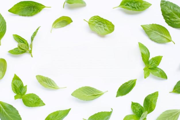Folhas frescas da manjericão no branco.
