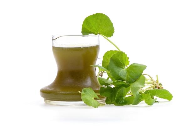 Folhas frescas de centella asiatica ou gotu kola e suco isolado em uma superfície branca.