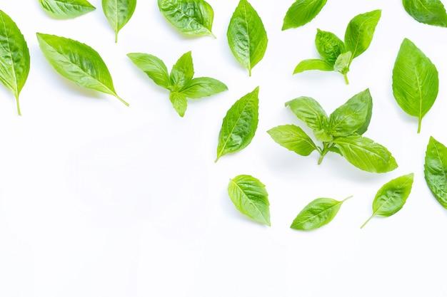 Folhas frescas de manjericão em branco