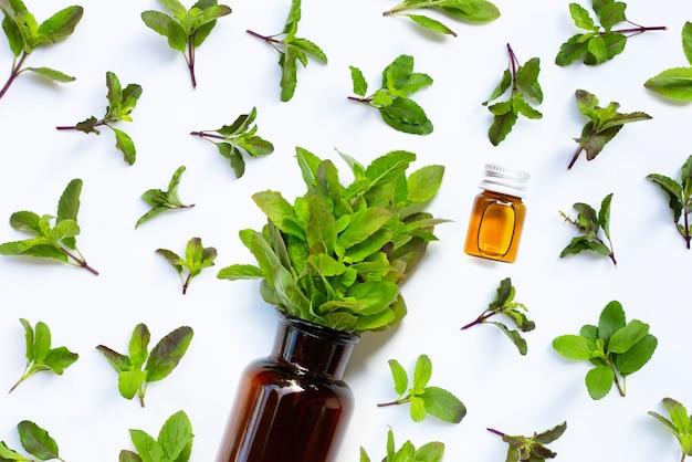 Folhas frescas de manjericão sagrado com frasco de óleo essencial.