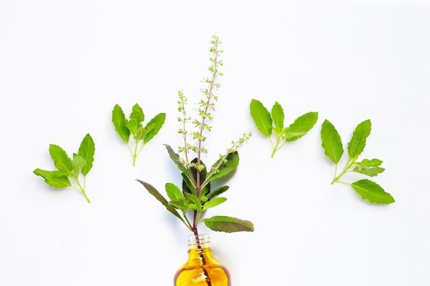 Folhas frescas de manjericão sagrado e flores com frasco de óleo essencial.