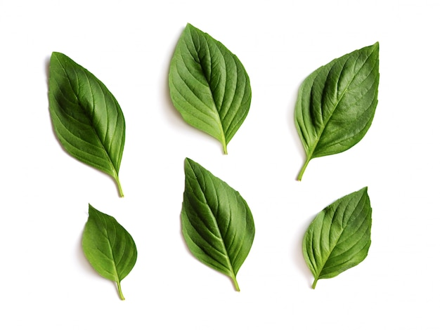 Folhas frescas de manjericão verde isoladas.