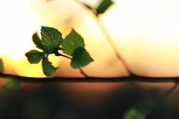 Folhas frescas de primavera em uma árvore