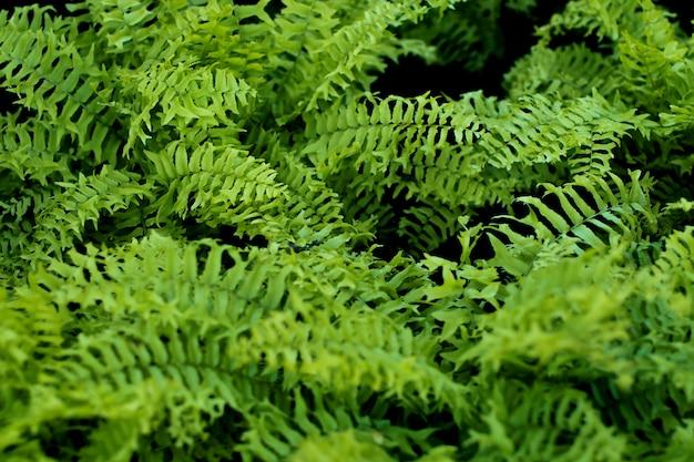 Folhas frescas de samambaia verde sobre fundo verde no jardim