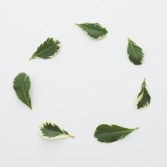 Folhas frescas, dispostas em moldura circular sobre a superfície branca