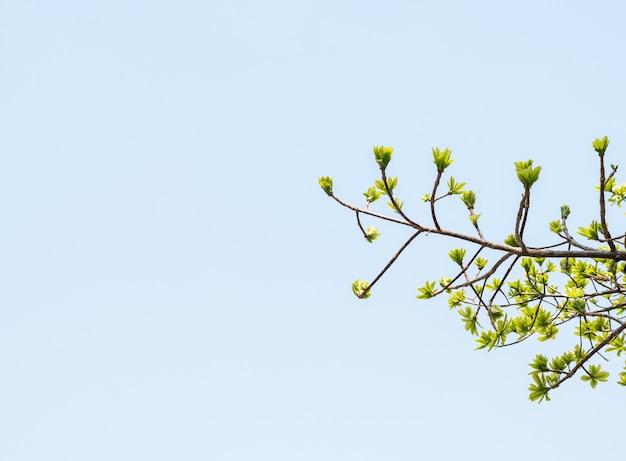 Folhas frescas novas sob o céu azul claro.