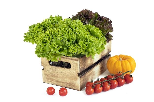 Folhas frescas verdes e vermelhas salade em uma caixa de madeira e uma pequena abóbora e um ramo de tomate cereja