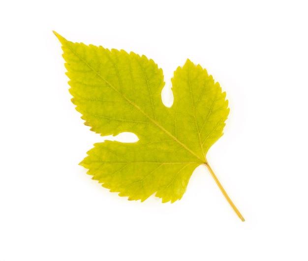 Folhas isoladas na superfície branca