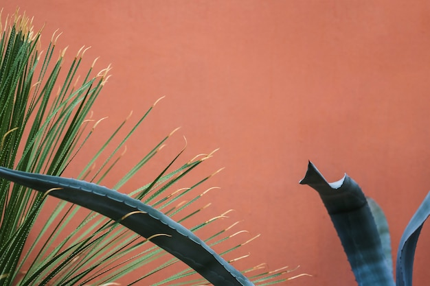 Folhas longas com espinho contra fundo colorido