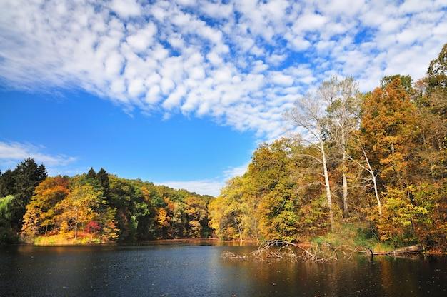 Folhas mágicas de paisagem amarela flutuando no lago