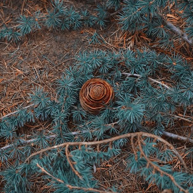 Folhas marrons e pinha no solo na temporada de outono
