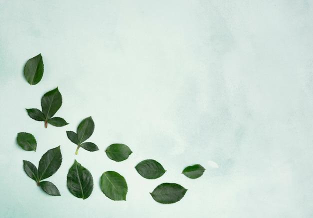 Folhas minimalistas com espaço de cópia